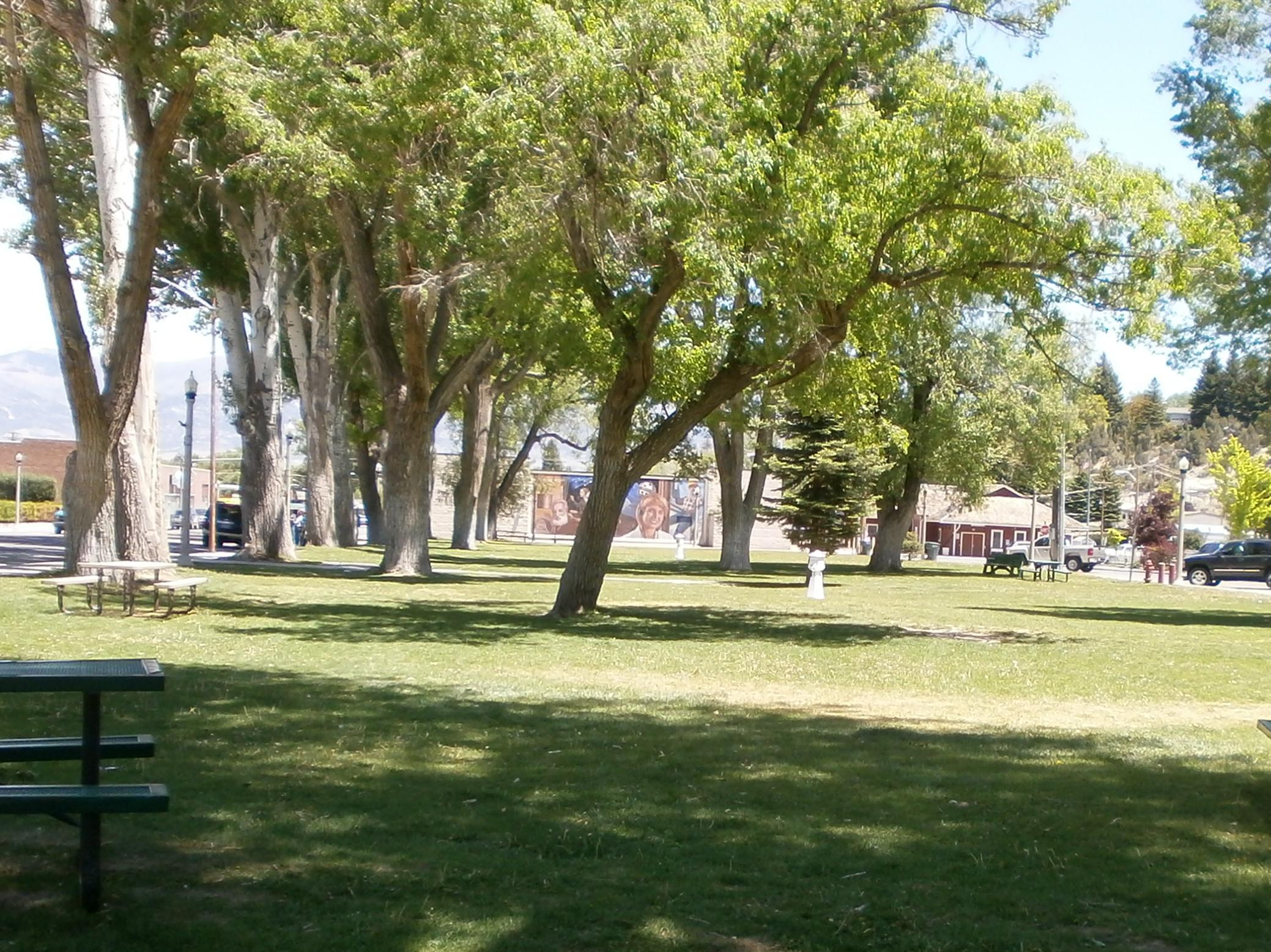 Trees near a Grassy Area and Picnic Table